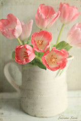 Pink Tulips photo by Lorraine Lewis
