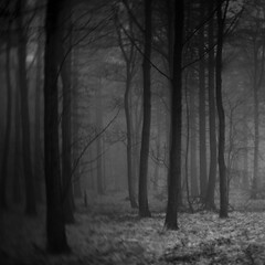 Forest IV (edit) photo by Andrew Lockie