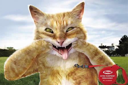 10则超可爱的动物创意广告!