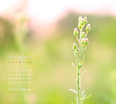 March Calendar photo by Faisal | Photography (I'm Back)