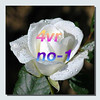 6819810952_baf95f1ace_t