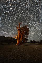 Ancient Life Under Ancient Stars photo by Jeffrey Sullivan