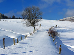 Winter landscape photo by RainerSchuetz