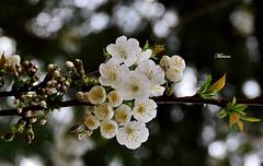 spring !!! photo by miriam259