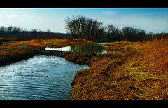 Beaver Dam on Meltwater Canal photo by LostMyHeadache: Absolutely Free *