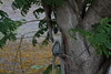27041089345_2dff2ceaee_t