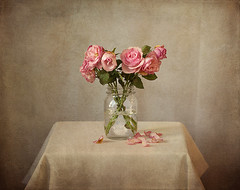 Roses photo by Ellenvd