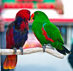 Kissing birds photo by Flipintex Fotos. Back for now