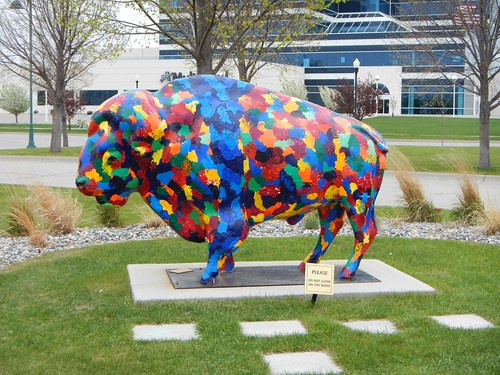 Buffalo in Moorhead
