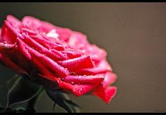 Water on the Flower Bed photo by Prasanna Gururajan
