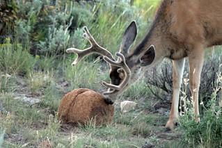 Fuzzy buck