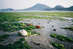 green beach (of last spring) photo by breeze.kaze