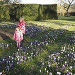 All the crocus are out<br/>25 Feb 2012