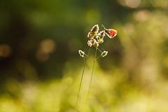 Butterfly photo by Norbert Králik