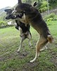 Fight !!