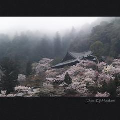長谷寺 遠望 photo by Eiji Murakami