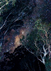 Milky Way through the Eucalypt Trees (Explored 8 June 2012) photo by Indigo Skies Photography