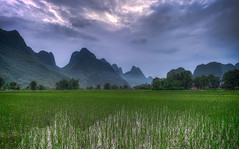 The Rice Fields of Yangshuo photo by Greg Annandale