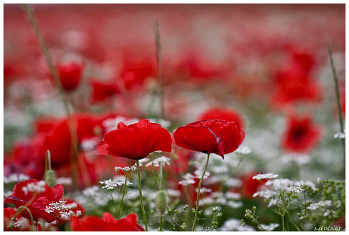 Bianco-rosso e verde....( Explore) photo by meoca63