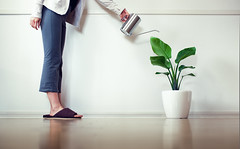The Leading Cause of Household Plant Death is Overwatering photo by torode