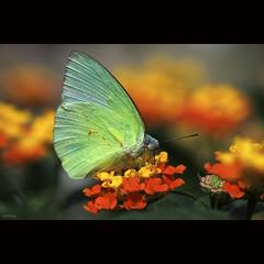 in summer garden photo by -clicking-
