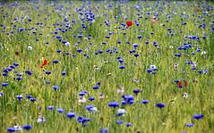 Blu,rosso e verde photo by marco marescotti