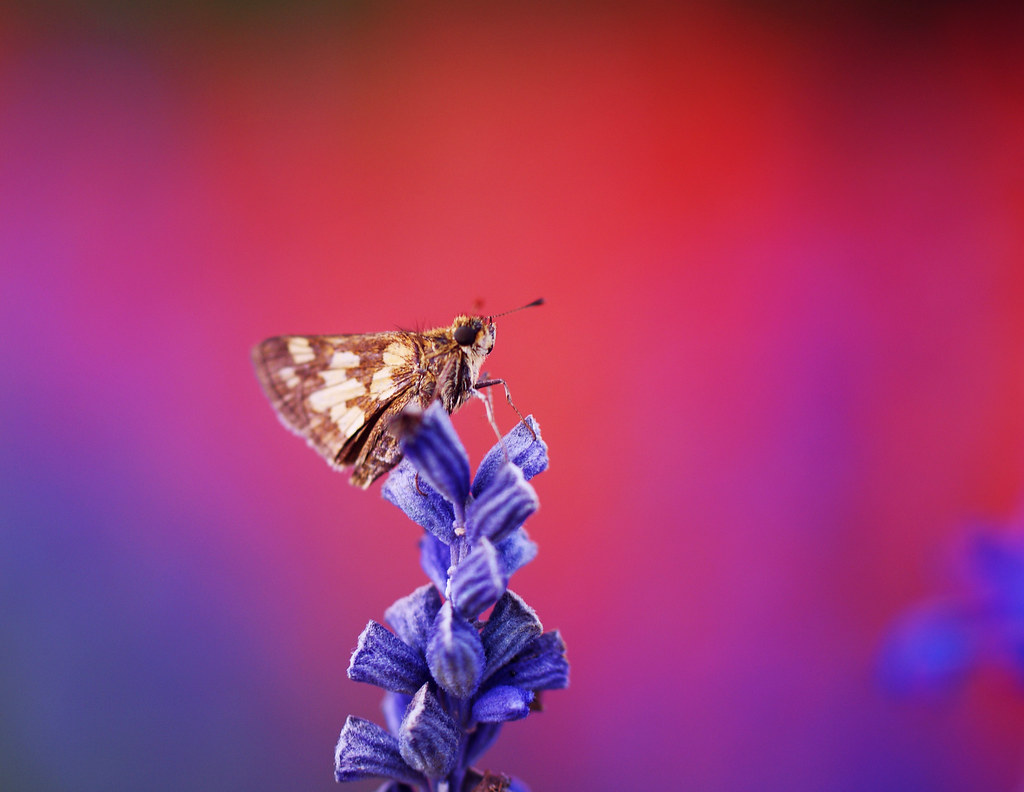 """If nothing ever changed, there'd be no butterflies""~Author Unknown photo by j man."