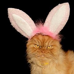 Garfi-Bunny Cat photo by E.L.A