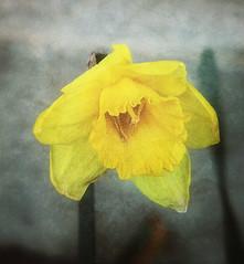 Sad flower photo by JulieH1976