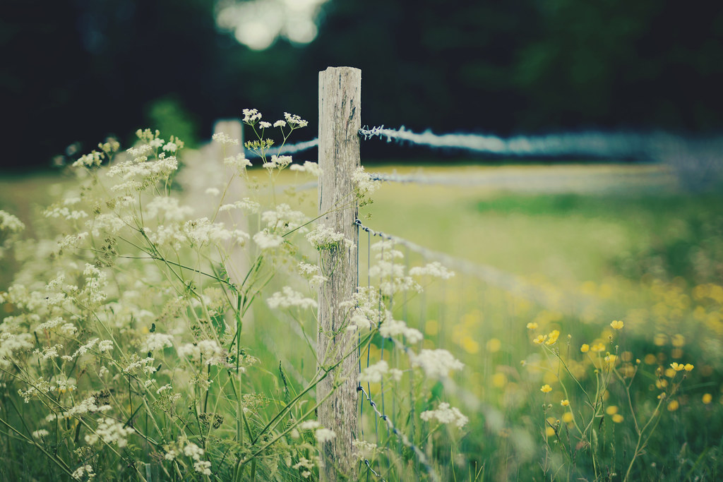 white meets yellow fence photo by Kirstin Mckee