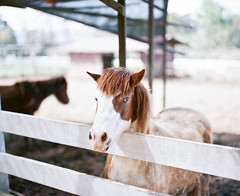 Horse photo by Allan_Lin