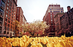 Spring on Park Avenue - Upper East Side - New York City photo by Vivienne Gucwa