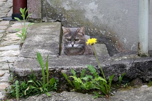 Cat vs cat III