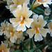 Rock Flowers (2863)