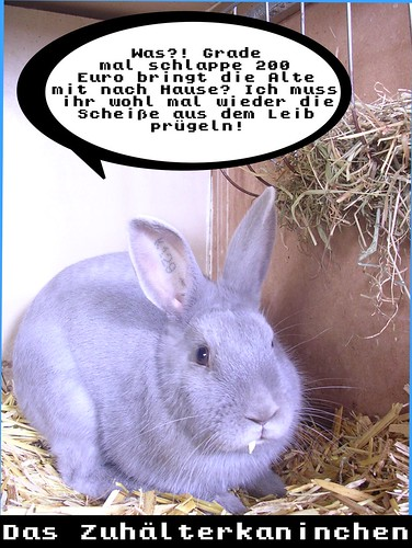kaninchenfoto1