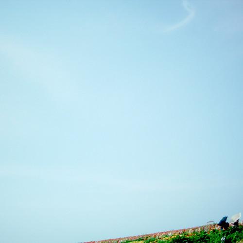 花畑と日傘