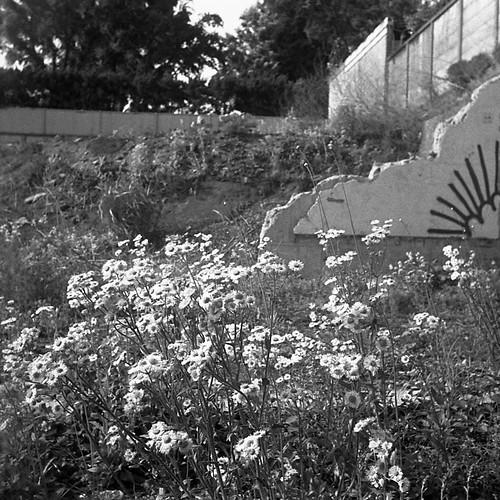 何かの跡地に咲く花