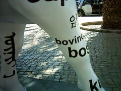 bovino1