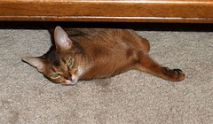 abby_under_table