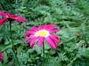 flower #2841