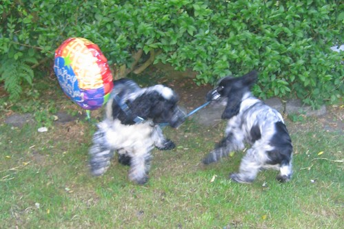 Blue and Colin play with a baloon