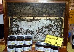 Live Honeybees!