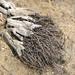 Joshua Tree Roots (3247)
