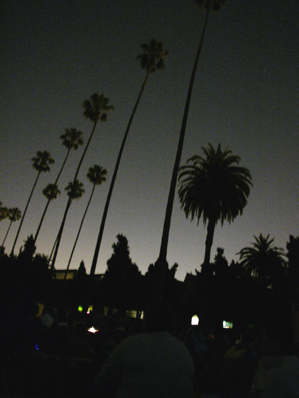 hollywood forever at night