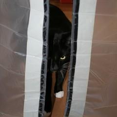 sergei at the zip door