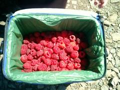 raspberries_blurry