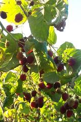 berries06m
