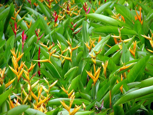 Plants in the office campus