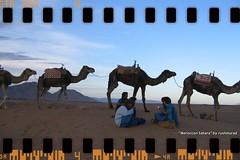 Moroccon Sahara