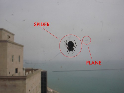 Spiders on a Plane
